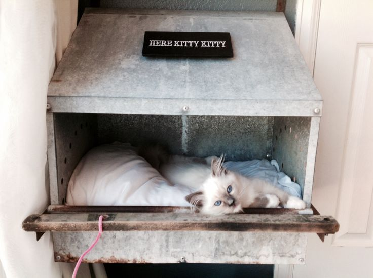 A place for my Ragdoll (floppy cat) to sleep. A chicken