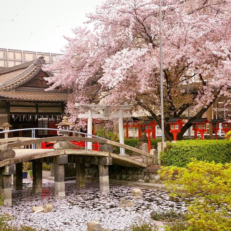 ☆Rokusonno-jinja shrine✴ 2017 4 15 Established in 963 Rokusonno-jinja shrine in the immediate neighborhood of Toji-temple is a sakura flower sightseeing spot. The cherry blossoms were scattering, but the pink petals that fell to the Shinryu-ike pond was beautiful 六孫王神社✴ 2017 4 15 963年創建 東寺の近くにある六孫王神社は桜の花の名所です 清和源氏の祖、源経基が祀られています。 桜の花は散りかけていましたが、神龍池に落ちたピンク色の花びらが綺麗でした #六孫王神社 #sakura #cherrybrossam #京都桜 # #Kyotoshrine #Kyototrip #Kyoto #KyotoJapan #amazingkyoto #retro_Jap...
