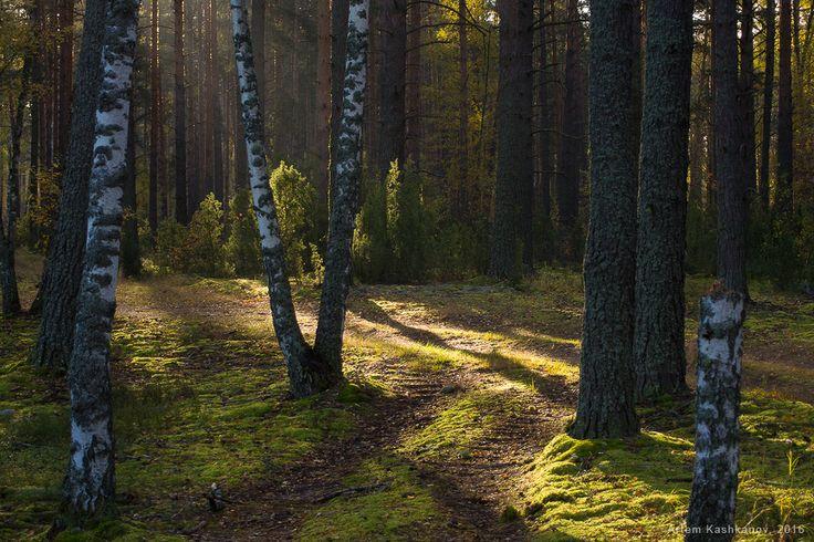 На лесных дорожках - Красивые осенние фотографии