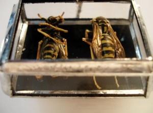 Lamerti: l'entomologia creativa nel bijou contemporaneo