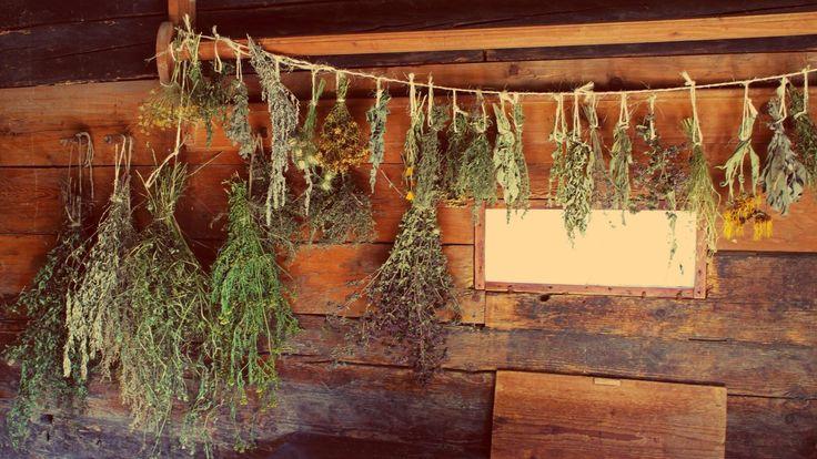 Ervas medicinais: colheita e secagem