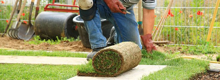 Buy premium grade turf and topsoil online from the UK's leading family-run turf suppliers. Suppliers of Turf & Topsoil for over 40 years in Essex. http://www.paynesturf.co.uk