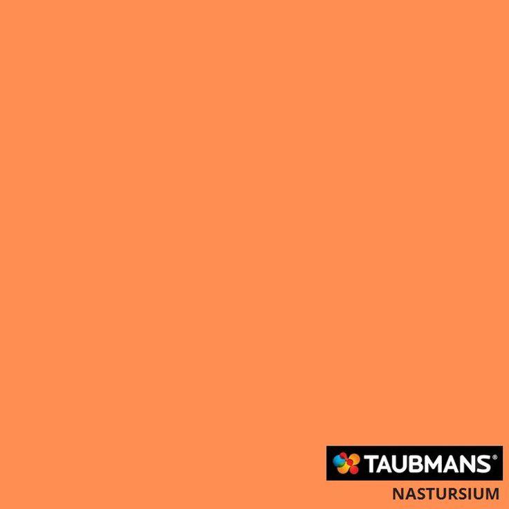 #Taubmanscolour #nastursium