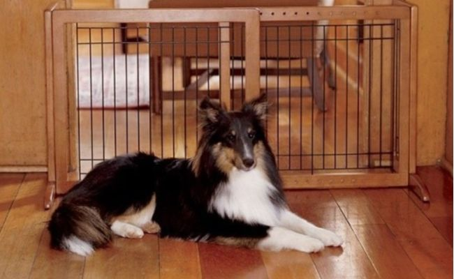 Choosing indoor pet gates for dogs sounds simple, doesn't it? Measure the space and buy one that fits, right? How hard can it be? #dogs #pets #gates #decor #dogfurniture