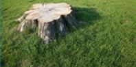 Save money get rid of the stump with this-Epsom Salt Formula for Stump Removal | eHow