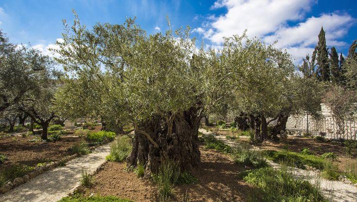 Jerusalem: Nähtävyydet, vinkit ja liput | GetYourGuide.fi