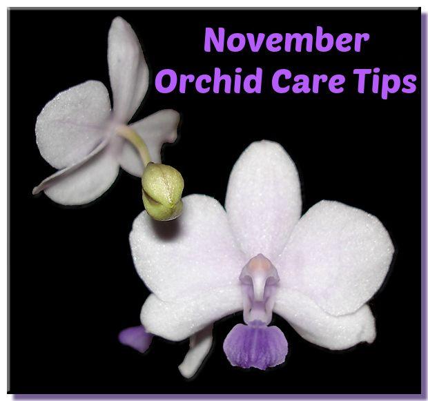 Die Besten 17 Bilder Zu Monthly Orchid Care Tips And Tricks Auf ... Garten Im November Tipps Pflege