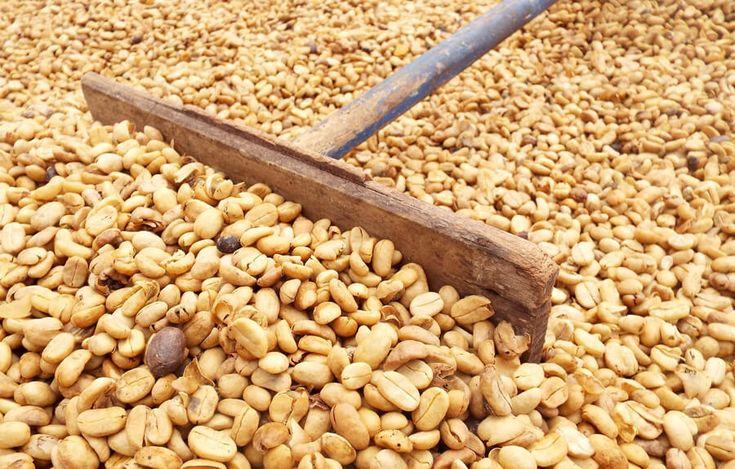 A kávé feldolgozása http://legjobbkave.hu/a-kave-feldolgozasa/