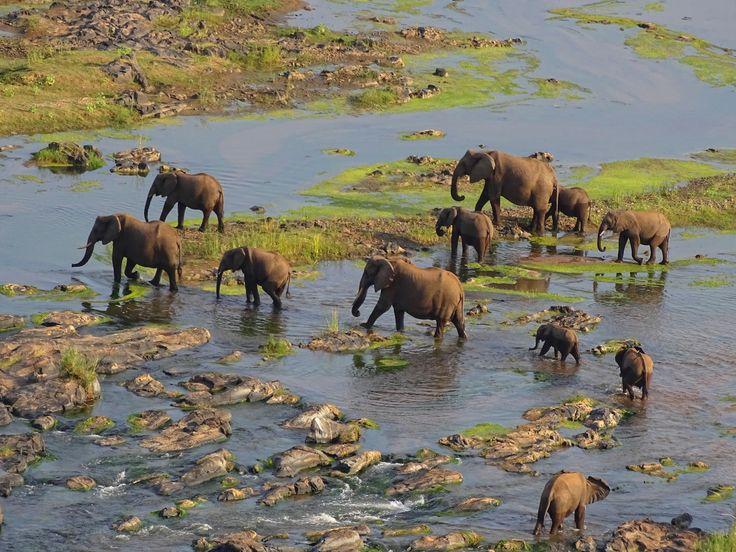 DSC07171   – Elephants!