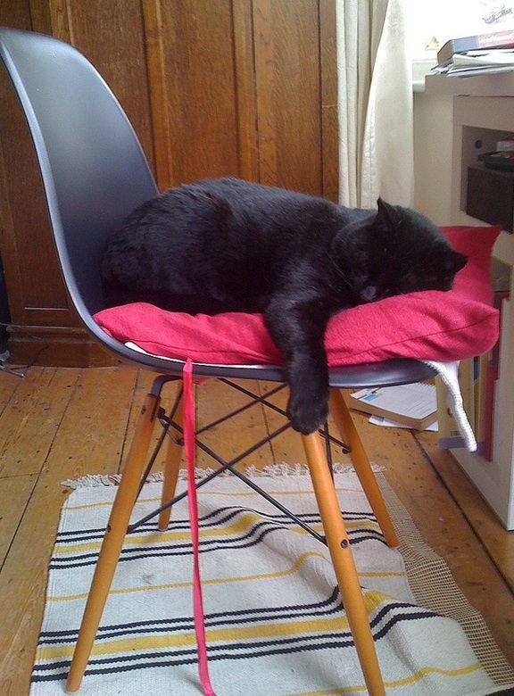 Black cat asleep on black Eames DSW Chair