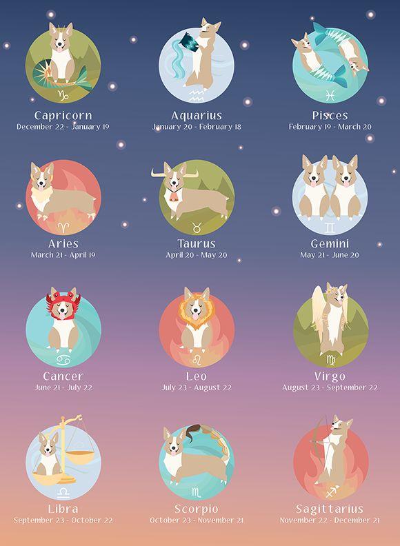 Zodiac corgis!