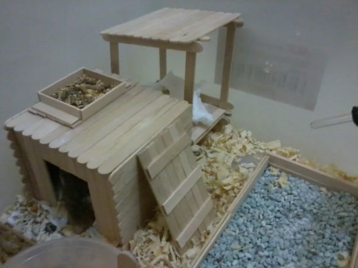 Popsicle stick creation - Hamster Central