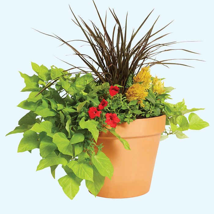 Try This Simple Design Idea Use Plants With Various