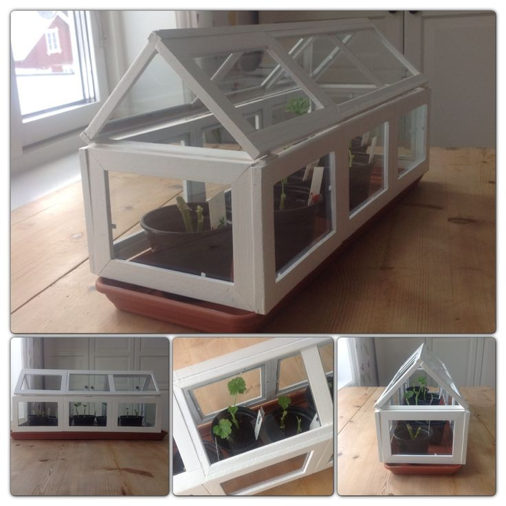 DIY - miniture greenhouse made with picture frames.
