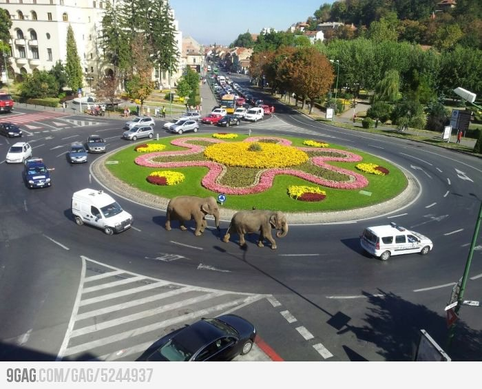 Meanwhile, in Brasov Romania....