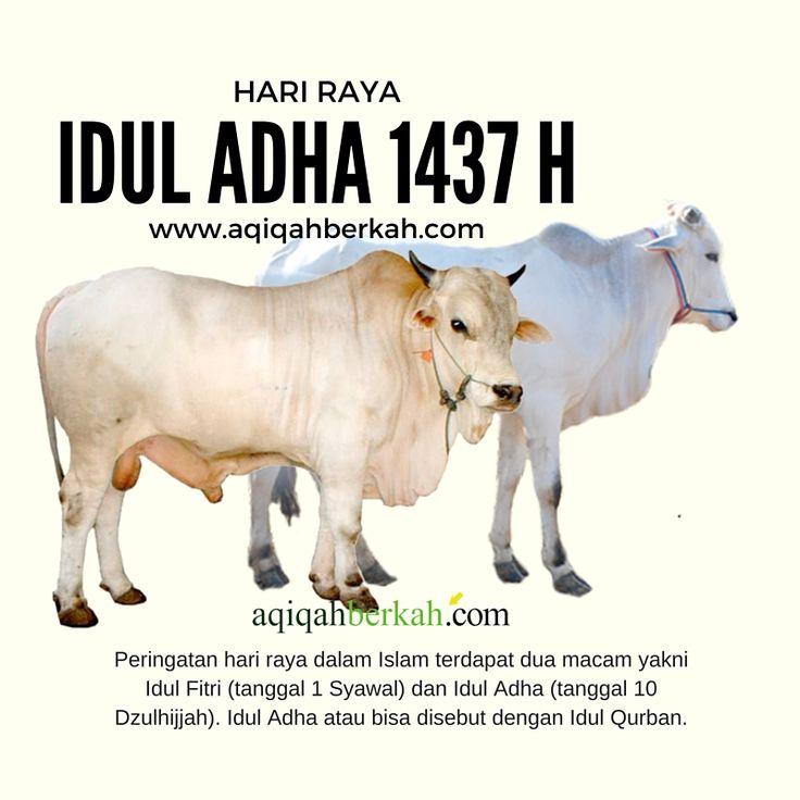 Idul Adha 1437 H  http://www.aqiqahberkah.com/idul-qurban-2016-idul-adha-1437-h