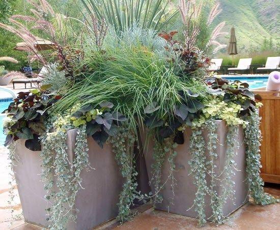 1000 images about concrete planters on pinterest for Garden pots portland