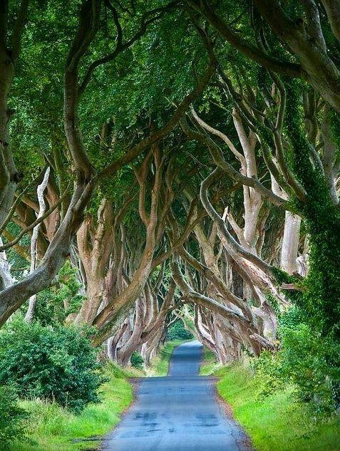 The Dark Hedges, Northern Ireland #AmazingPlaces #BeautifulPlaces