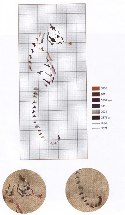Gallery.ru / Фото #17 - Poissons Coquillages et Crustaces - Orlanda