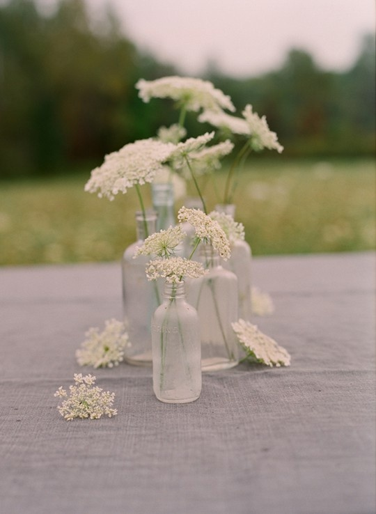 Clustered vessels of queen anne's lace.