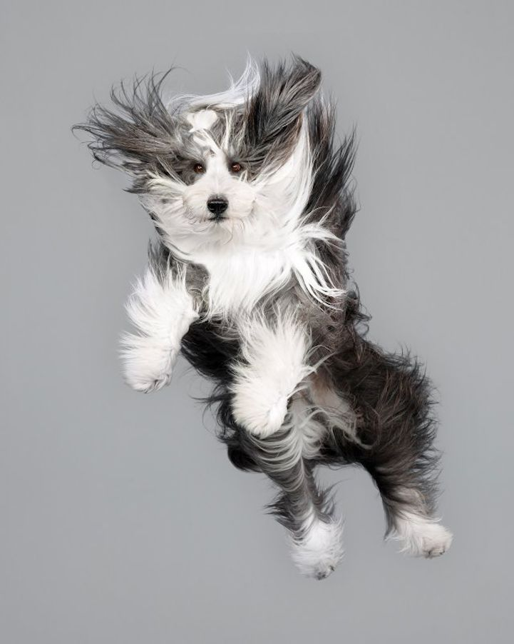 Hilarious Portraits of Cute Dogs Floating in Mid-Air - My Modern Met