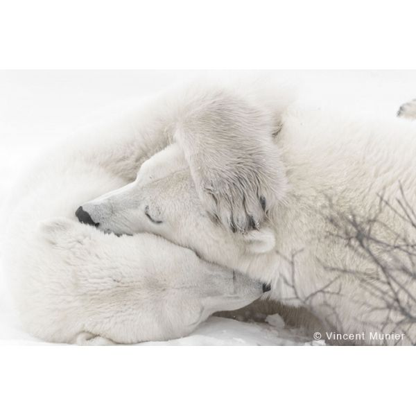 PHOTO BOOK WOLRD OF ANIMAL VOL.13: animal photobook, animal photography
