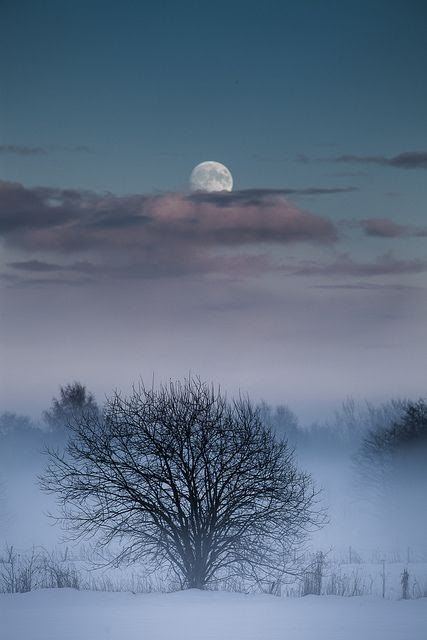 Moon and Tree by Tore Heggelund