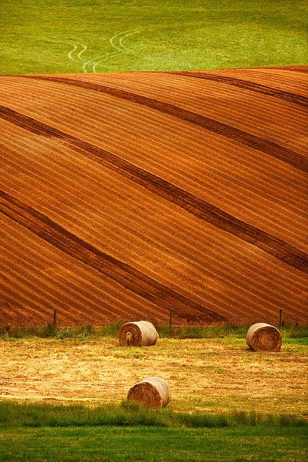 Crops, Pemberton, South Western Australia