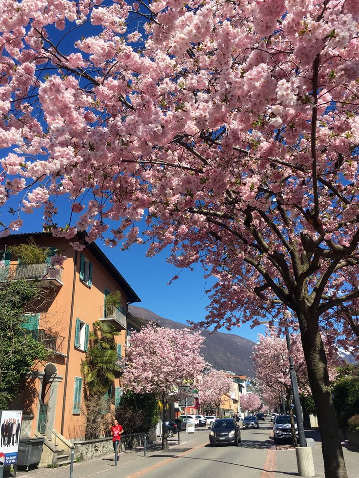 Ascona at Spring time