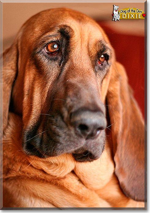 M Landsky- Bloodhound 1000+ ideas abo...