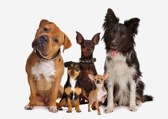 Żywienie psów różnych wielkości