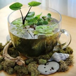 A crafty response to a hibernating outdoor garden is an indoor tabletop water garden! So easy, so rewarding.