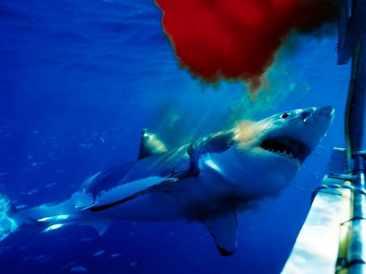 219 best hd wallpaper images on pinterest hd wallpaper shark wallpaper hd voltagebd Images