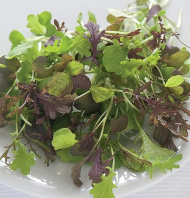 I just ordered up a BUNCH of different zingy, zippy microgreen seeds!