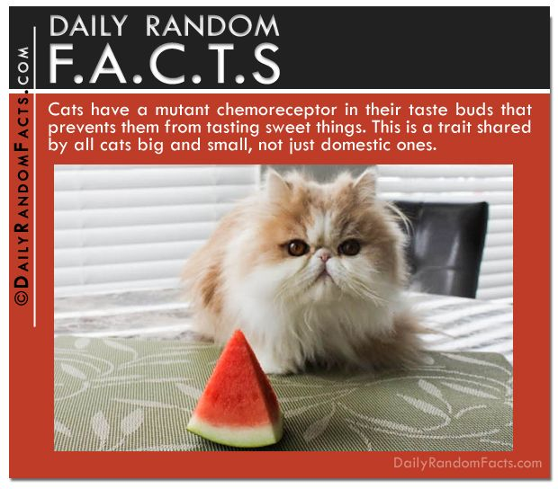 Top 20 Random Facts