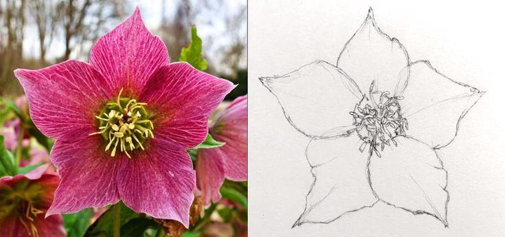 Wie man schöne Blumenkunst mit Stiften zeichnet
