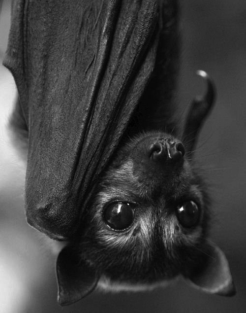 Black baby bat #onlyblack #blackmixedmedia