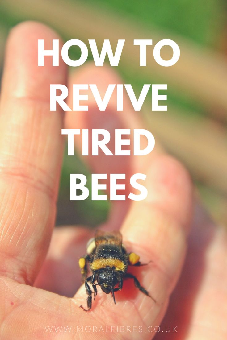 HOW TO REVIVE TIRED BEES via @moralfibres. So handy to know: revive tired bees with a simple sugar water solution. #ThoughtfulLiving