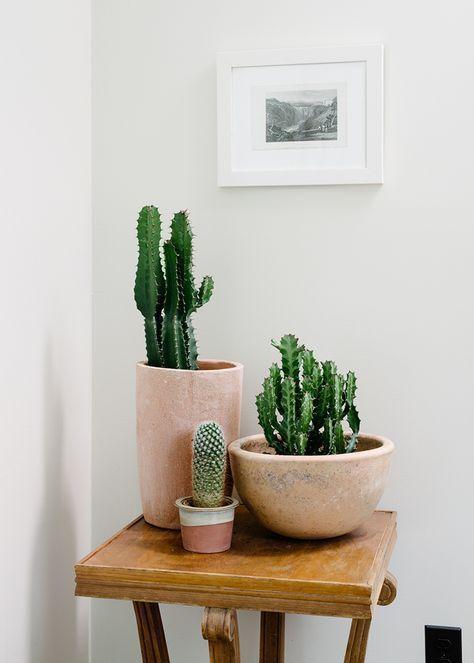 blush tones & cactus različne velikosti lončkov in rastlin (ter oblik)