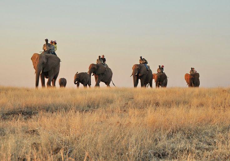 Safari na słoniach w Victoria Falls