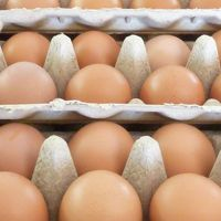 With a quality rating of 9.2 out of 10, you can be certain that when you purchase #WindellamaOrganics eggs, you are getting some of the best quality eggs available to purchase in Australia.