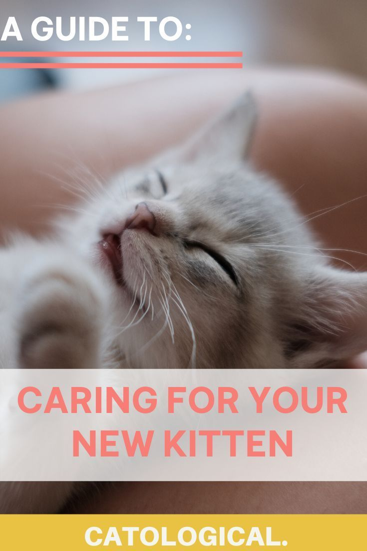 How To Care For And Take Care Of A New Baby Kitten Like An Expert In 2020 Kitten Care Cat Parenting Cat Care Tips