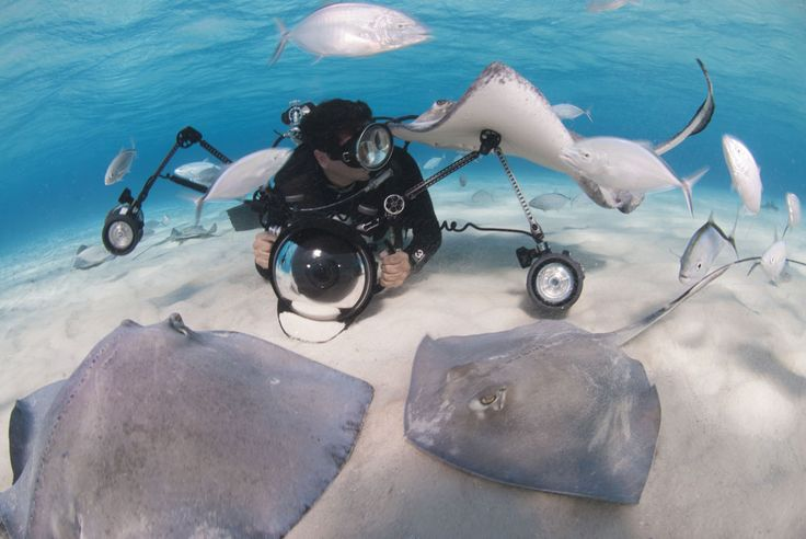 42 best images about deep blue cayman on pinterest for Deep sea fishing grand cayman