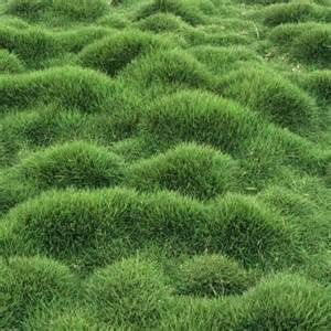 ideas about Zoysia Grass on Pinterest | Scott lawn care, Scotts lawn ...