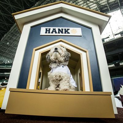 Hank the Milwaukee Brewers Mascot Gets a Doghouse