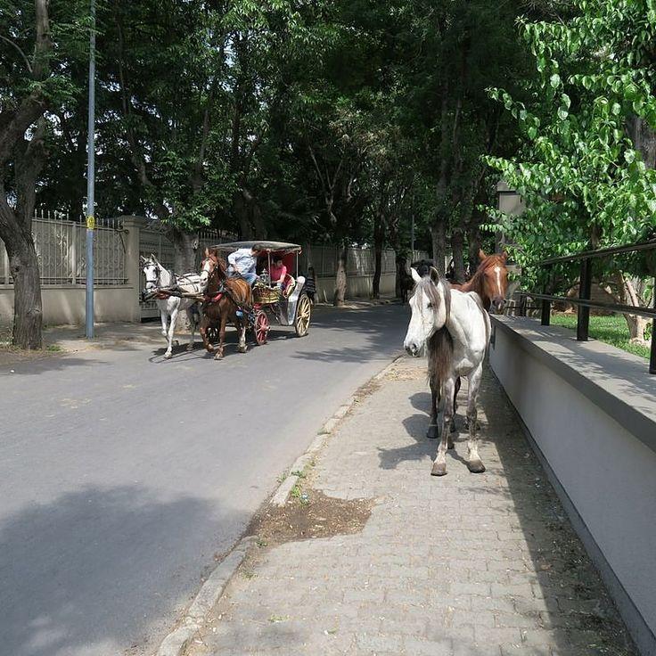 Das Paradies hat in Istanbul einen Namen: Die Einheimischen nennen es #Prinzeninseln  Strände Naturparks  frei laufende Pferde und Pferdekutschen Anstatt Autos findest du auf der größten der Inseln: #Büyükada  Ich spaziere gemütlich weiter zum Griechischen Kloster auf der Spitze der Insel. #Pferd #Pferde #pferdekutsche #Türkei #tuerkei #turkey #turkeyhome #TürkeiUrlaub #Türkei2016 #Reise #Reisen #Reisefieber #Fernweh #fernsucht #Istanbul #Urlaub #Städtereise #städtereisen #urlaub2016…