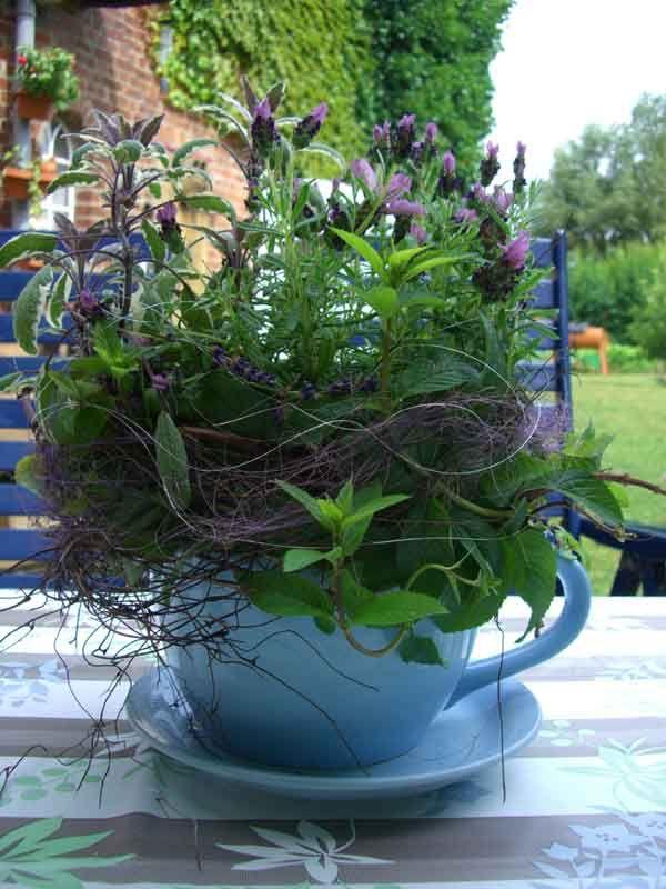 Bylinky v byte | Kvety a Záhrada