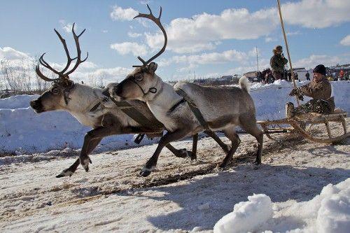 Reindeer herders competition atReindeer Herder's Day inEvenkia