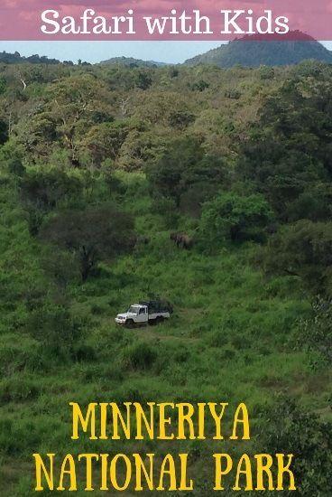 Going on Safari in Sri Lanka - Minneriya National Park