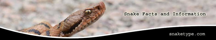 Snake Facts and Information